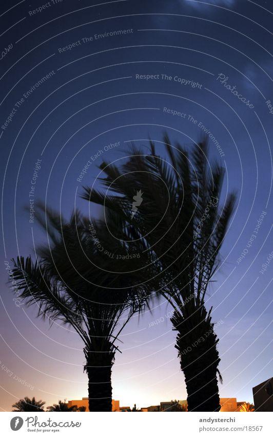 Heller Horizont Palme Baum Dubai Vereinigte Arabische Emirate Nacht Sternbild Himmel kleiner wagen Silhouette
