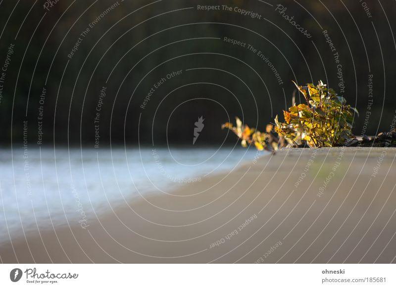 Mauergewächs Natur Wasser Pflanze Wald Wand Landschaft Umwelt Hoffnung Sträucher Seeufer Schönes Wetter Gebäude