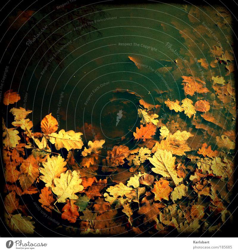 paradise. lost. Natur Wasser Blatt ruhig Umwelt Herbst Freiheit Lifestyle Park Design Zufriedenheit Feld Wandel & Veränderung Ruhestand Pfütze stagnierend