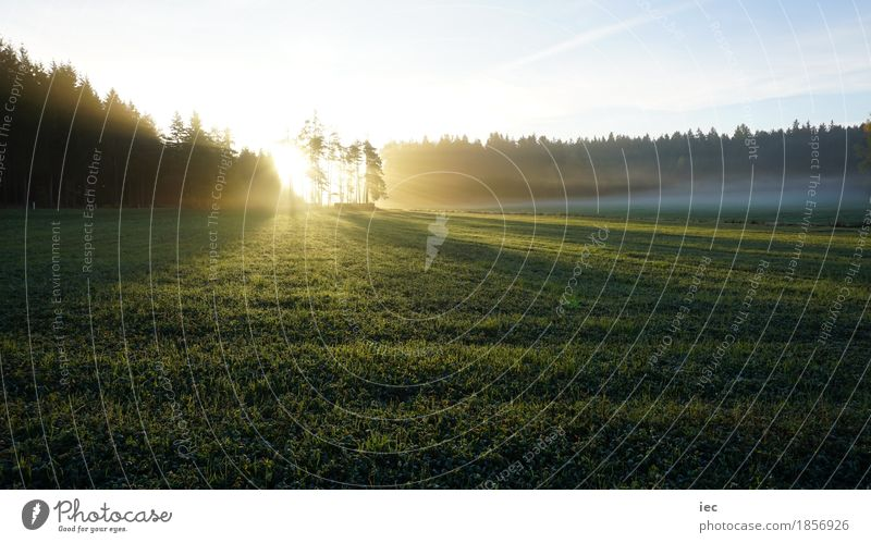 Morgensonne Natur Landschaft Pflanze Erde Luft Himmel Sonne Sonnenaufgang Sonnenuntergang Sonnenlicht Herbst Wetter Schönes Wetter Nebel Baum Gras Moos Wiese