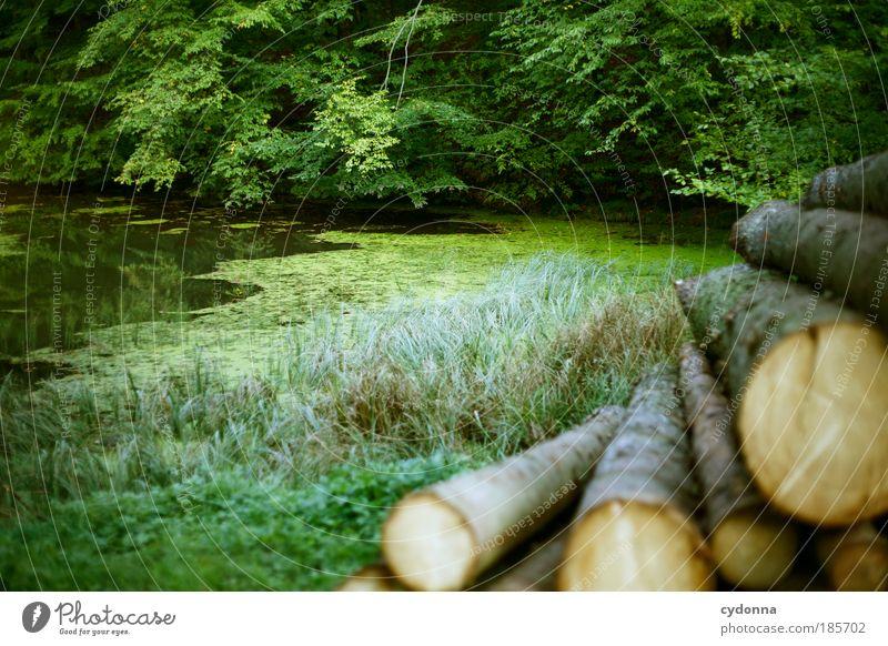 Waldteich Natur schön Baum Pflanze ruhig Leben Erholung träumen Landschaft Umwelt Zeit Perspektive Zukunft Wandel & Veränderung Vergänglichkeit