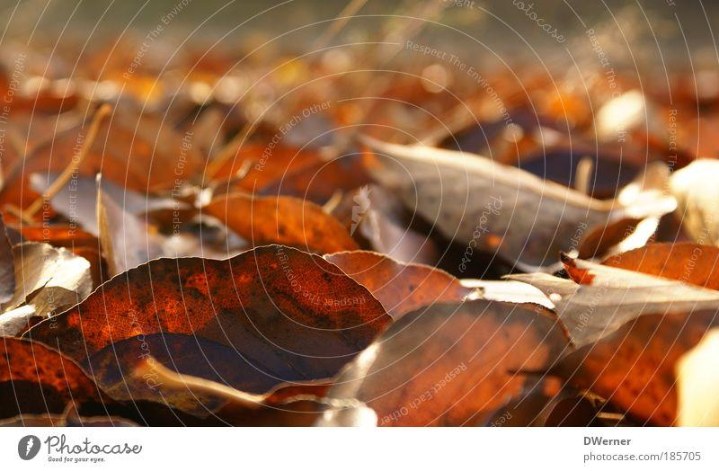Herbstlaub Natur rot Blatt Landschaft gelb Umwelt Tod Kunst braun liegen Wachstum Urelemente fallen Blühend Wohlgefühl