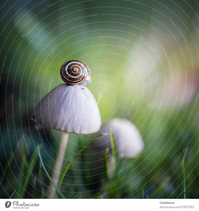 Noch ein Pilz Natur Pflanze Tier Herbst Gras Wiese Schnecke 1 Wachstum wandern ästhetisch braun gelb grün Optimismus achtsam Wachsamkeit geduldig anstrengen