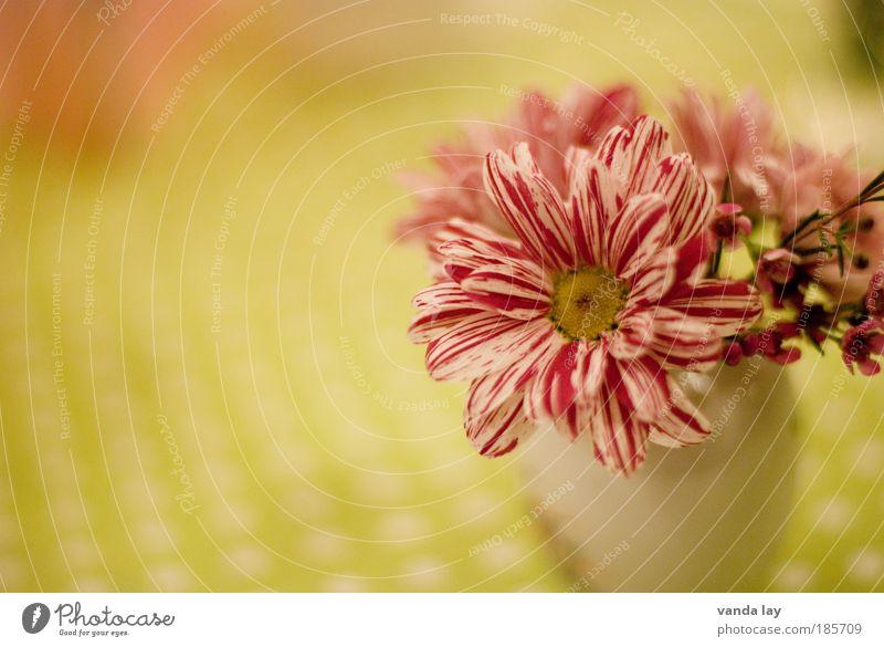 Tischdeko Häusliches Leben Innenarchitektur Dekoration & Verzierung Raum Wohnzimmer Pflanze Blume frisch niedlich schön Tischdekoration Vase Blumenstrauß rosa