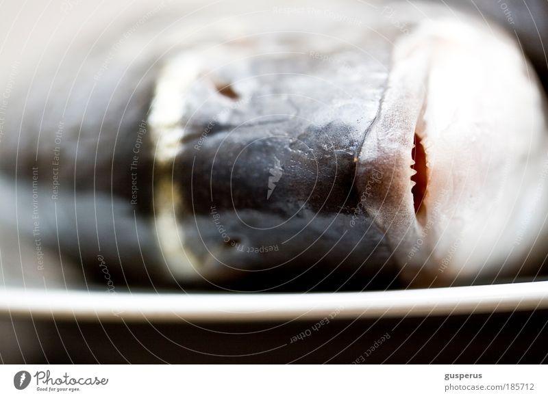 fresh fish Lebensmittel Fisch Meeresfrüchte Dorade Ernährung Sushi Teller Totes Tier 1 natürlich Sauberkeit kochen & garen Farbfoto Makroaufnahme