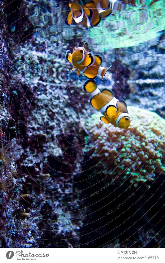 Underwater Love Natur Wasser Ferien & Urlaub & Reisen Pflanze Meer Tier Ferne Umwelt Küste Tierpaar Wildtier nass Tourismus verrückt ästhetisch Häusliches Leben