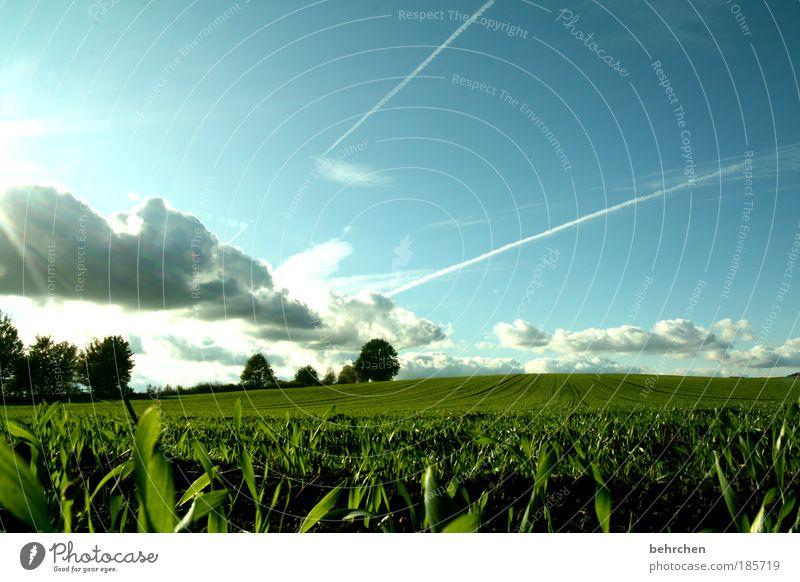 *120* tage überstehen... Ausflug Freiheit Himmel Wolken Frühling Herbst Schönes Wetter Pflanze Baum Gras Sträucher Wiese Feld Glück Unendlichkeit grün