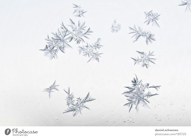 Blumen Eis Frost kalt blau weiß Winter Eiskristall Hintergrund neutral filigran Kristallstrukturen Makroaufnahme