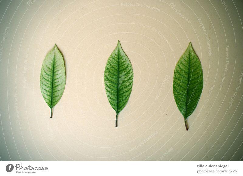 die grünen Natur schön Blatt Herbst Umwelt Ordnung ästhetisch authentisch liegen einzigartig natürlich Partnerschaft Pflanze Anordnung Anhäufung