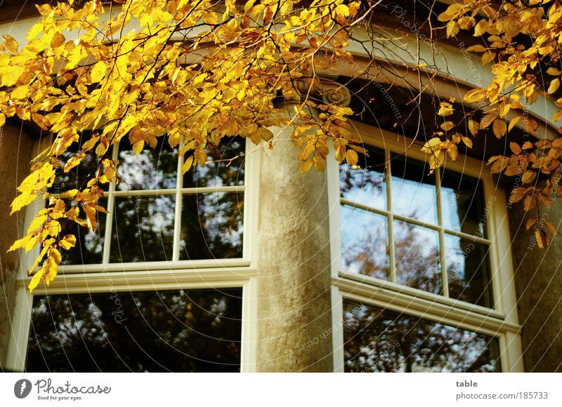 Herrenhaus alt Baum blau Blatt Haus gelb Herbst Wand Gefühle Fenster Holz grau Stein Mauer Gebäude Glas