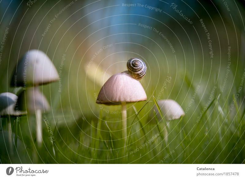 Aussichtspilze Natur Pflanze blau grün Tier Herbst Wiese Gras braun Stimmung Design Häusliches Leben ästhetisch Erfolg Schönes Wetter Mobilität