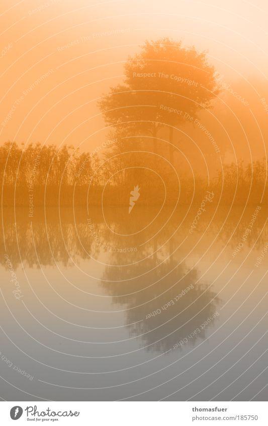 Ein Licht geht auf ;) Landschaft Himmel Sonne Herbst Nebel Baum Flussufer Teich Bach Denken genießen ästhetisch gold Zufriedenheit Romantik träumen