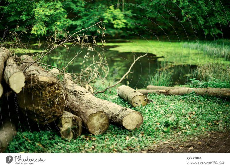 Werden und Vergehen Erholung ruhig Ausflug Umwelt Natur Landschaft Pflanze Baum Gras Wald Teich einzigartig Zufriedenheit Idylle Leben nachhaltig Tod träumen