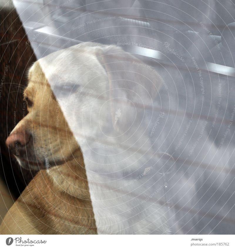 Mate Freizeit & Hobby Verkehrsmittel PKW Haustier Hund 1 Tier beobachten fahren sitzen träumen warten einzigartig achtsam Wachsamkeit Sehnsucht Mobilität