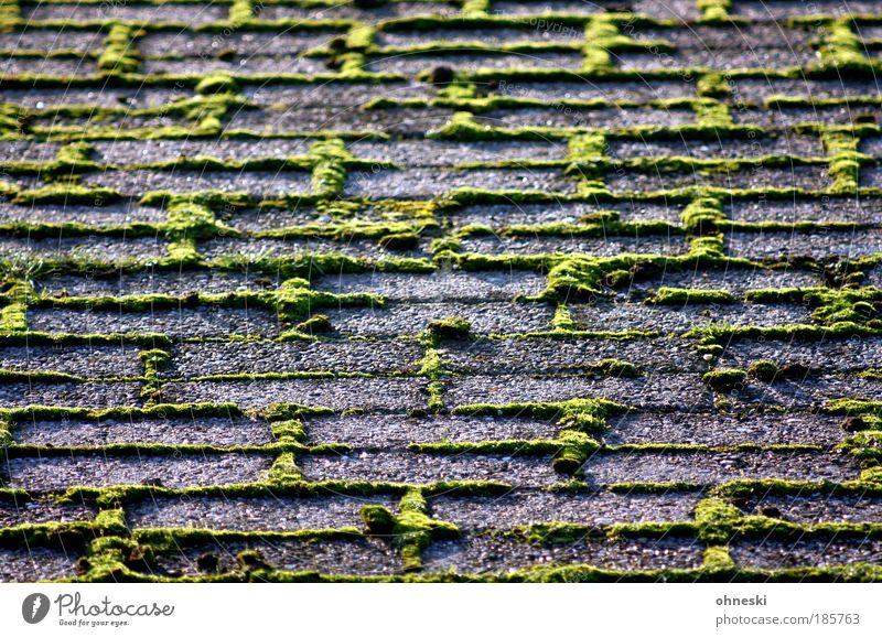 Ohne Moos nix los Umwelt Natur Herbst Pflanze Stein grün Unkraut Pflastersteine Farbfoto Außenaufnahme Dämmerung Licht Schatten Kontrast
