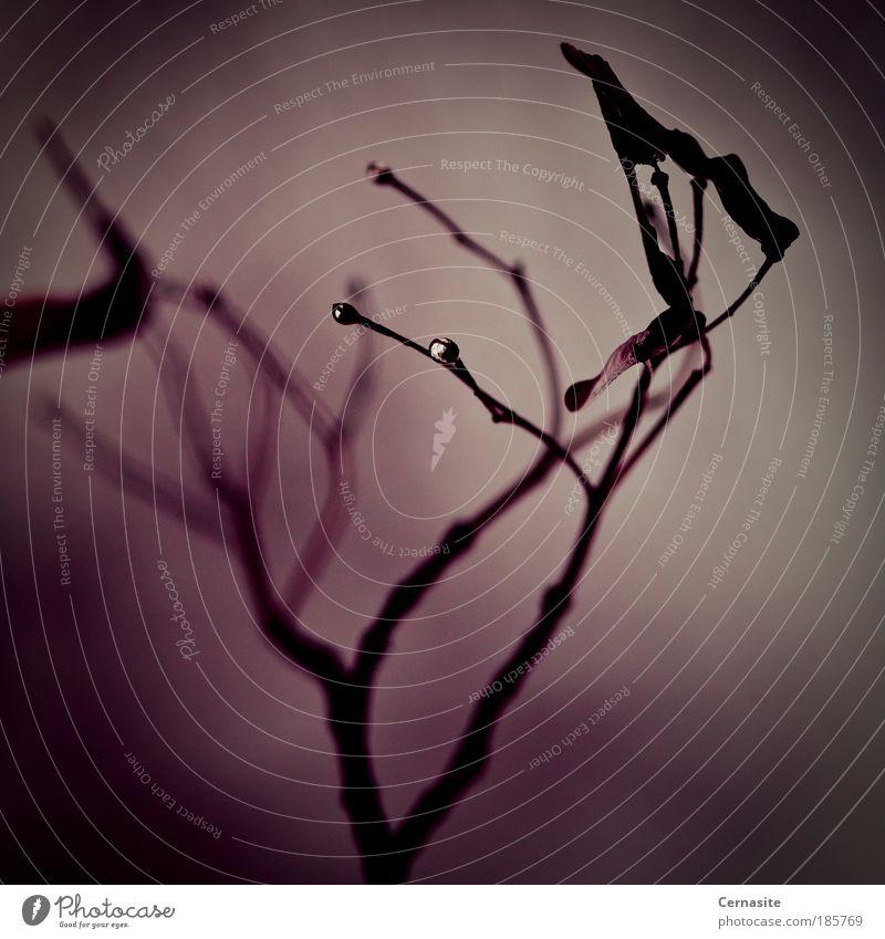 Natur schön Baum Pflanze Blatt Winter schwarz dunkel Wiese Herbst wild nass ästhetisch Wassertropfen kaputt Sträucher