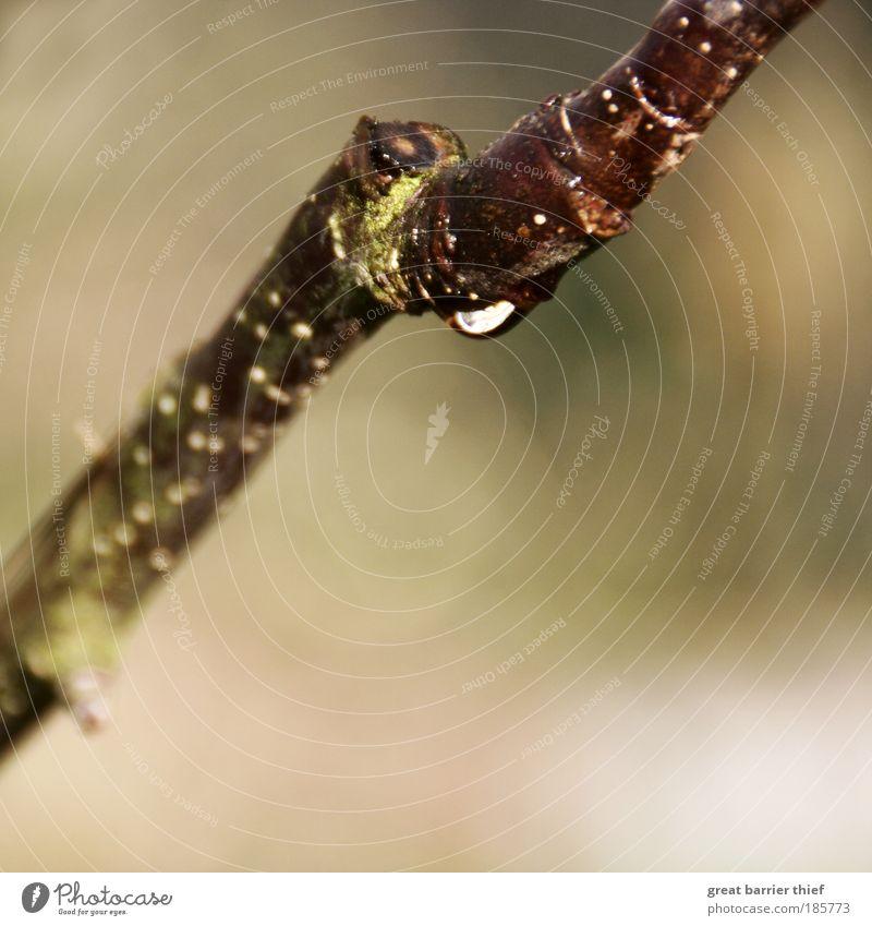 Abhängen Natur Wasser Baum Pflanze ruhig Erholung Herbst Holz Zufriedenheit braun Wetter elegant Umwelt nass Hoffnung rund