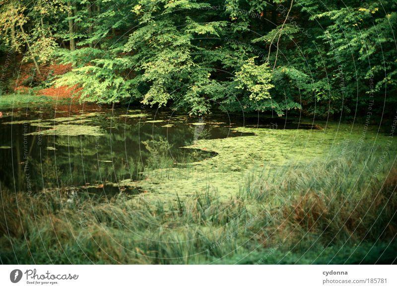 Entspannung harmonisch Erholung ruhig Ferne Umwelt Natur Landschaft Baum Grünpflanze Wald Teich einzigartig Gefühle Idylle Leben nachhaltig schön stagnierend