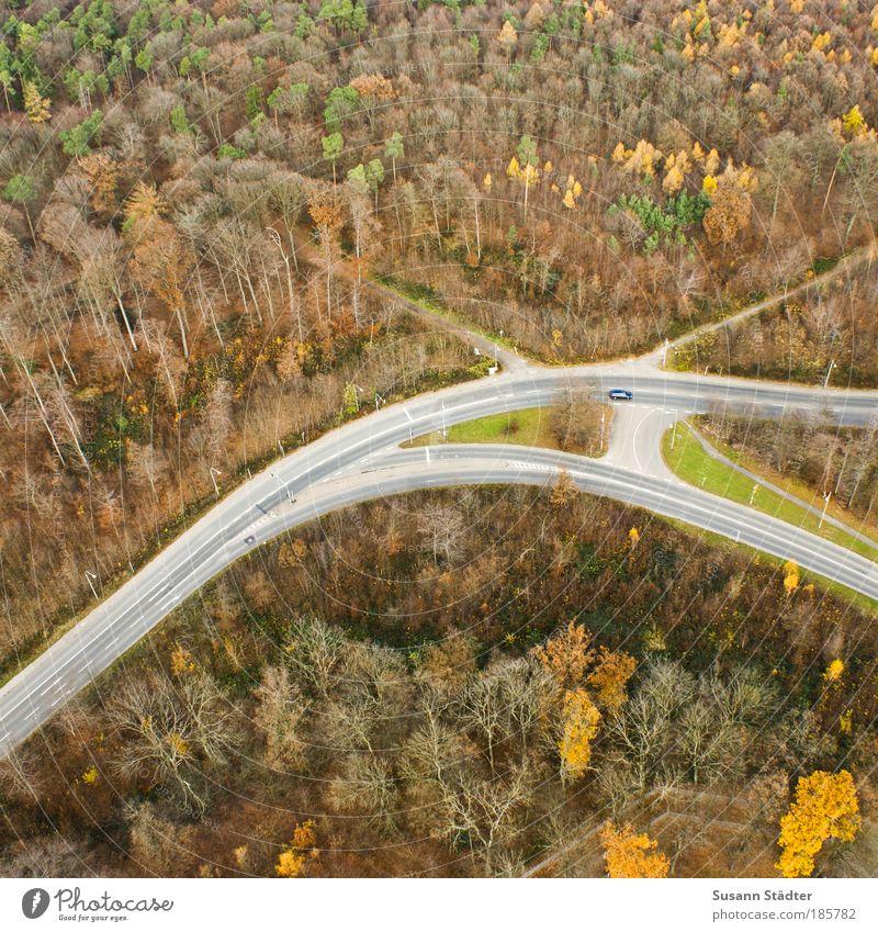 Herbst von oben Baum grün Straße Farbe Wald Herbst Wiese Wege & Pfade PKW Landschaft braun orange Verkehr Platz leuchten Verkehrswege