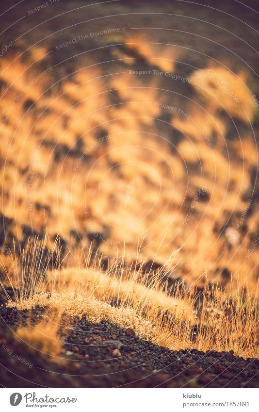 Detail von Vulkan Ätna, Sizilien, Italien anzeigen Ferien & Urlaub & Reisen Tourismus Sommer Berge u. Gebirge Natur Landschaft Wolken Nebel Park Felsen Straße