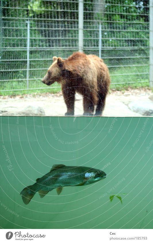 Als noch Frieden herrschte Natur Wasser grün ruhig Blatt Tier Ernährung Schweiz Linie warten Fisch Schwimmen & Baden wild Wildtier Zoo Material
