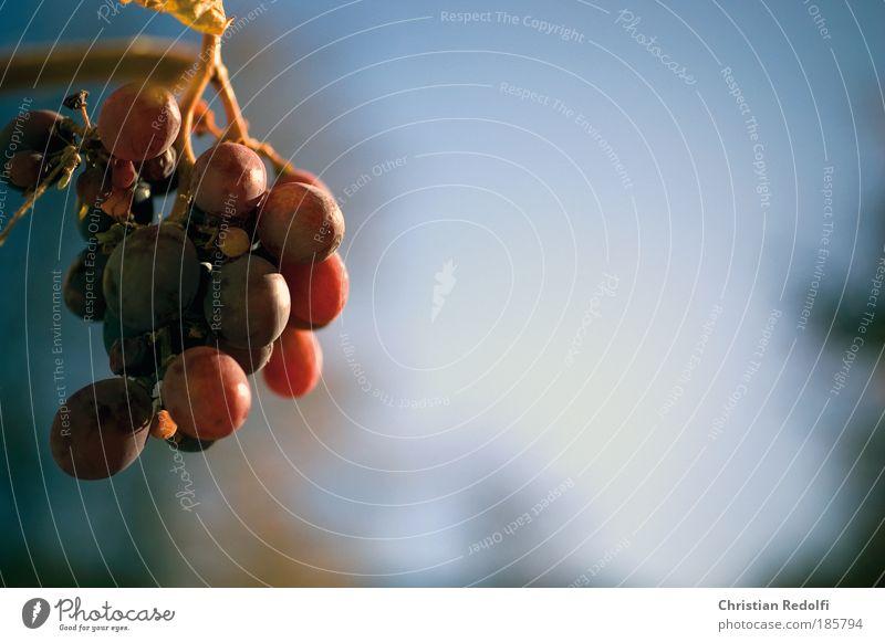 Weintraube Natur Pflanze Herbst Lebensmittel Stimmung Frucht Kraft Ernährung Duft Abendessen Alkohol Mittagessen Festessen Nutzpflanze Büffet Brunch