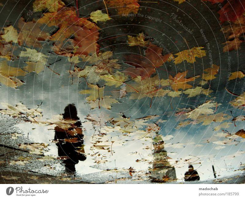 away Wasser Unterwasseraufnahme Blatt Einsamkeit dunkel kalt Berlin Herbst Reflexion & Spiegelung Natur träumen Traurigkeit Küste Angst Wetter Trauer