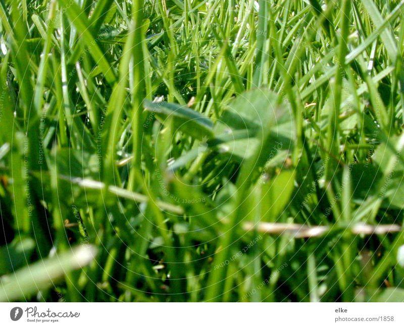 einstückdazu Natur grün Wiese Gras