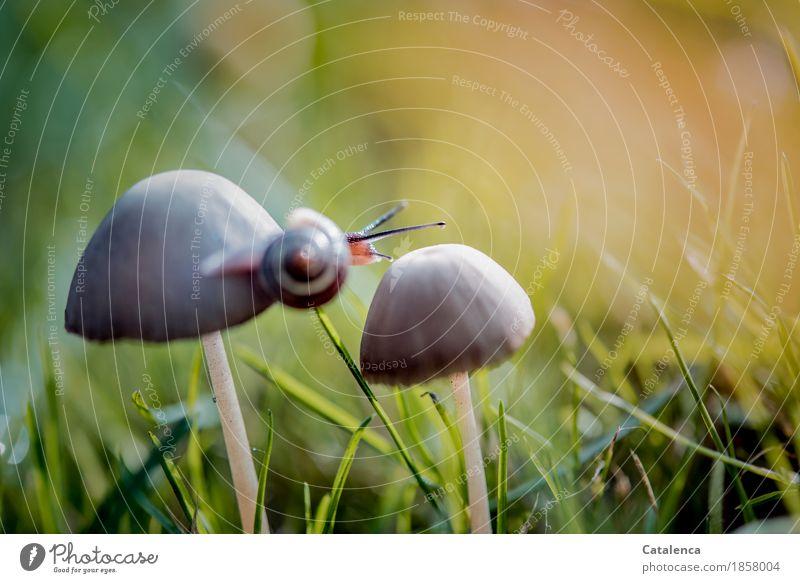 Überquerung Natur Pflanze grün Tier Umwelt Herbst Wiese Bewegung Gras braun orange Zufriedenheit gold ästhetisch sportlich Pilz