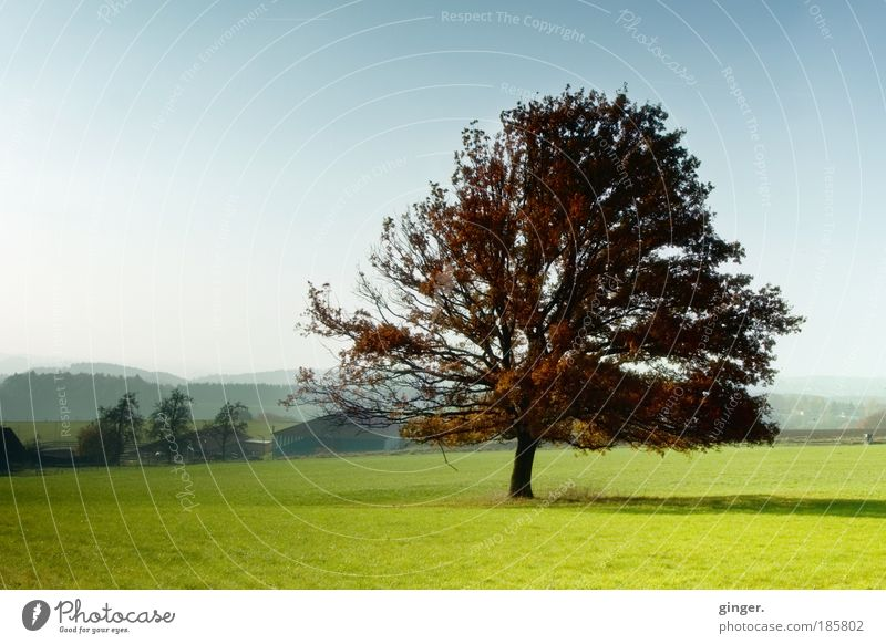 Die dritte Jahreszeit blau grün Baum Landschaft Wiese Herbst Stimmung braun Zufriedenheit ästhetisch Schönes Wetter Hügel Neigung harmonisch Geäst Verlauf
