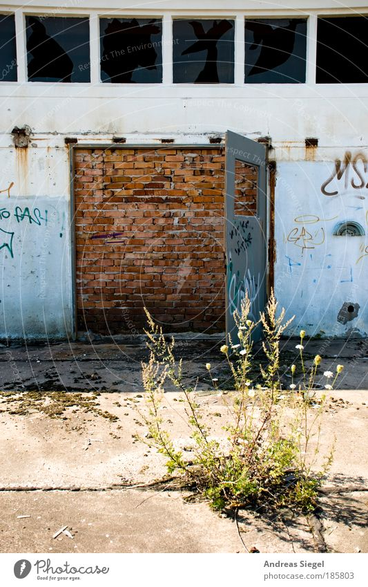 Das Tor zur Welt Natur Pflanze Haus Fenster Wand Architektur Gebäude Stein Mauer Tür Kraft kaputt authentisch außergewöhnlich Hoffnung trist