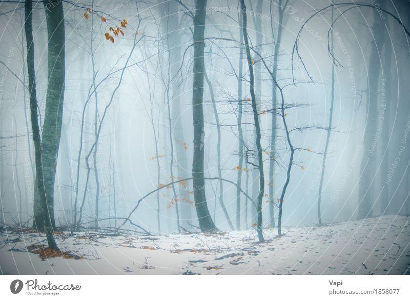 Winter verschneiten Wald Natur blau weiß Baum Landschaft Blatt dunkel schwarz Umwelt gelb Herbst Schnee grau Tourismus