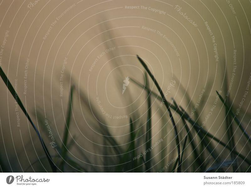 Guten Morgen Sonne! Pflanze Gras Sträucher Wiese Bewegung Blick aufwachen Herbst Gedeckte Farben Außenaufnahme Detailaufnahme Menschenleer Morgendämmerung