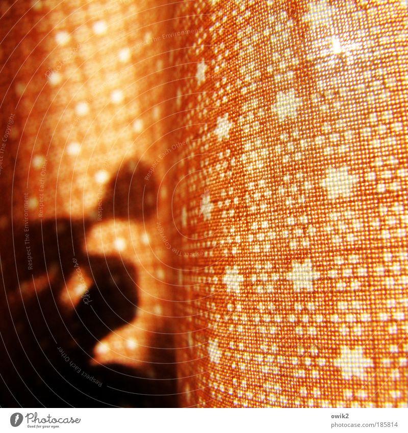 Seltene Gewächse weiß Pflanze Blatt Innenarchitektur orange Wohnung Wachstum Design frisch Häusliches Leben Dekoration & Verzierung einfach nah exotisch