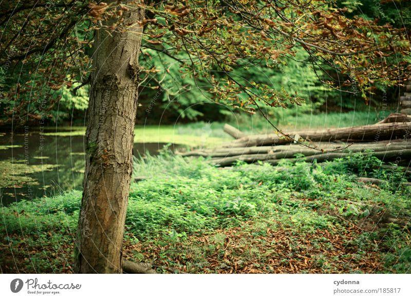 Erste Zeichen des Herbstes schön harmonisch Wohlgefühl Erholung ruhig Ausflug Umwelt Natur Landschaft Pflanze Baum Gras Blatt Wald einzigartig Idylle Leben