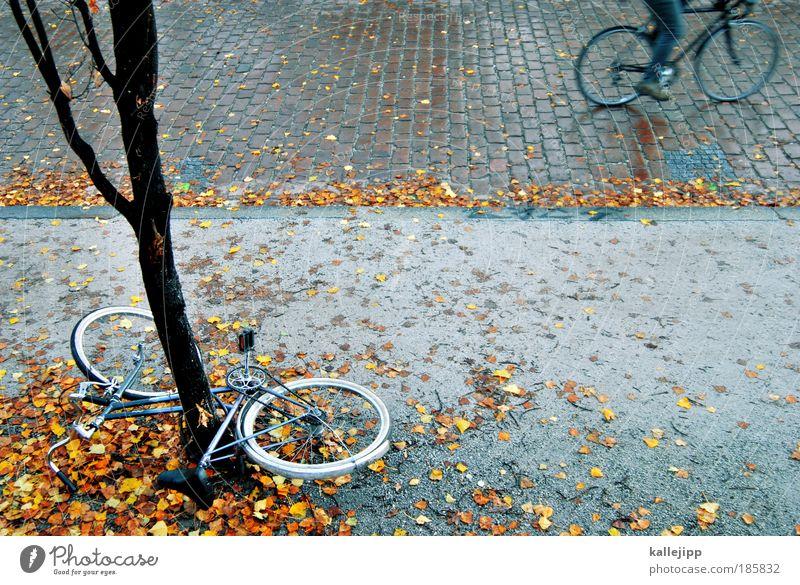 grenzwertig Lifestyle Freizeit & Hobby Fahrrad 1 Mensch Umwelt Herbst Baum Park Verkehr Personenverkehr Straße Wege & Pfade fahren Unfall Rennrad Baumstamm
