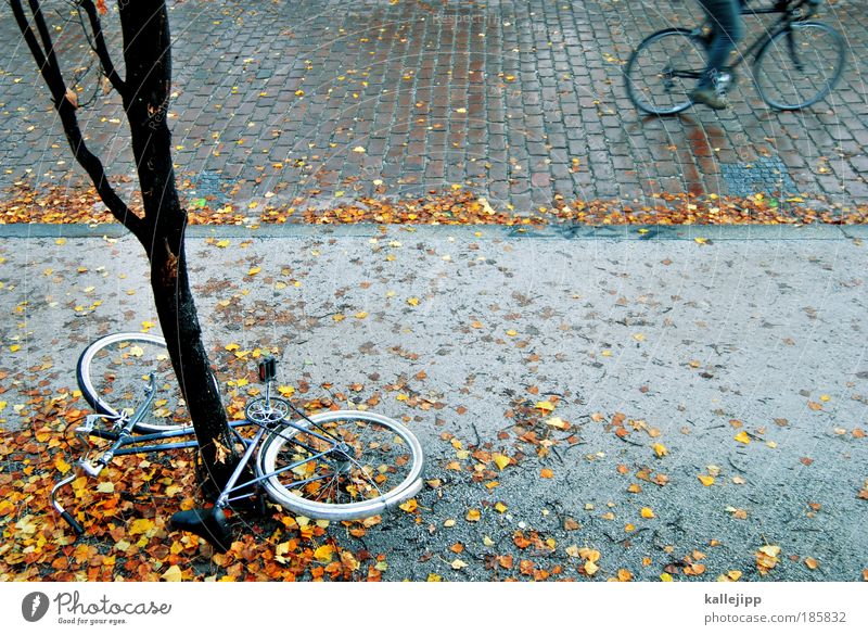 grenzwertig Mensch Baum Blatt Umwelt Straße Herbst Wege & Pfade Park Regen Fahrrad Freizeit & Hobby nass Verkehr Lifestyle fahren Bürgersteig