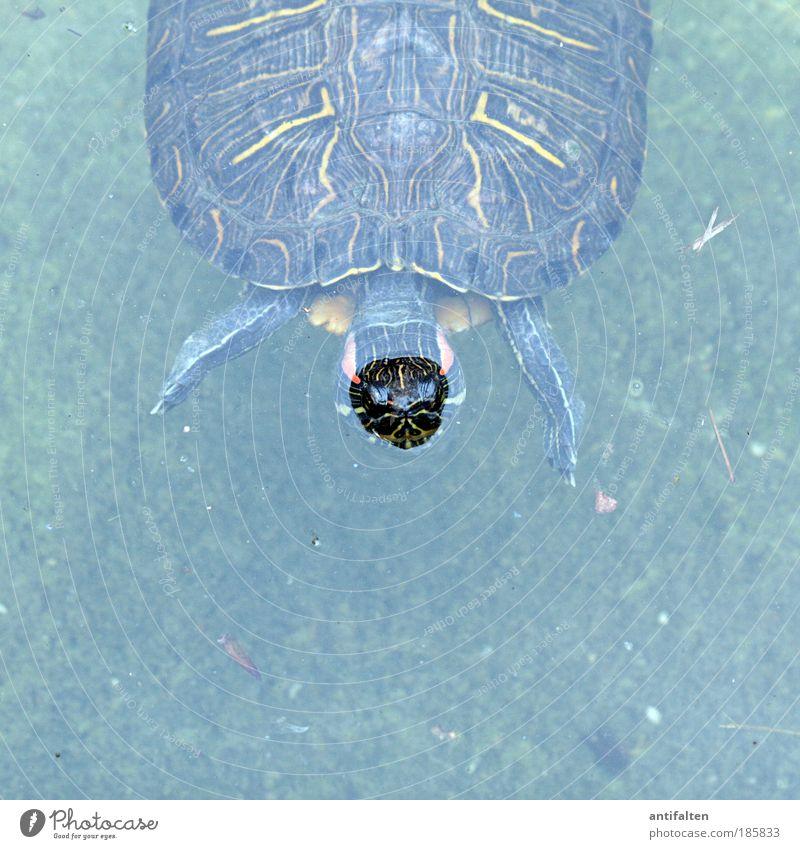 Krötenmann elegant Ausflug Duisburger Zoo Umwelt Natur Wasser Sommer Park Flussufer Tier Tiergesicht Aquarium Schildkröte Wasserschildkröte Panzer 1 entdecken