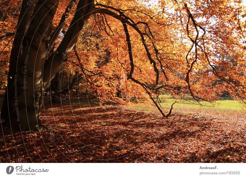 Herbst Natur Baum Pflanze rot Wald Garten Park Landschaft Umwelt Herbstlaub Oktober Buche Naturschutzgebiet herbstlich Herbstwetter