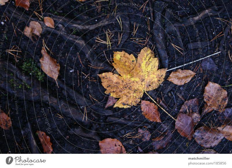 herbstblatt Natur Blatt Einsamkeit ruhig Umwelt Herbst Park Erde Wetter Zufriedenheit einzigartig Vertrauen Frieden Urwald Umweltschutz Wahrheit