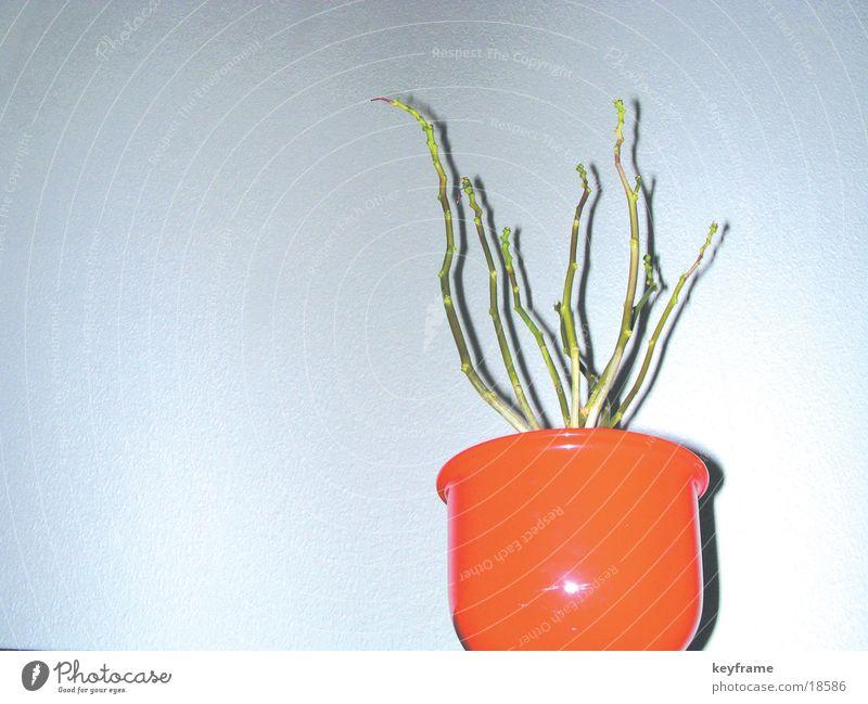 Blumentopf leer Häusliches Leben karg