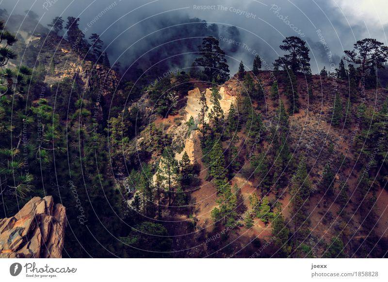 Paisaje Lunar Ferien & Urlaub & Reisen Insel Natur Landschaft Sonnenlicht Sommer Klima Schönes Wetter Nebel Wald Berge u. Gebirge Teneriffa Spanien Wege & Pfade