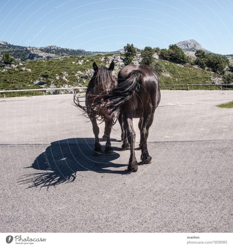 Kooperation Tier Nutztier Pferd 2 blau braun grau grün Teamwork Schattenspiel Straße Berge u. Gebirge stehen 69 Farbfoto Außenaufnahme Muster
