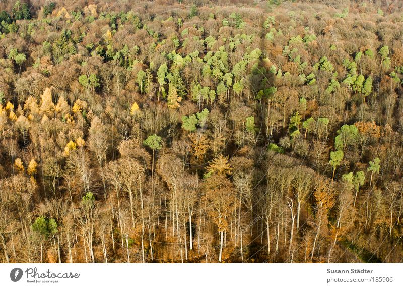 Schattenwerfer Baum grün Blatt Wald Herbst Wiese braun orange groß Dach Turm Hügel Balkon Bauwerk Schatten