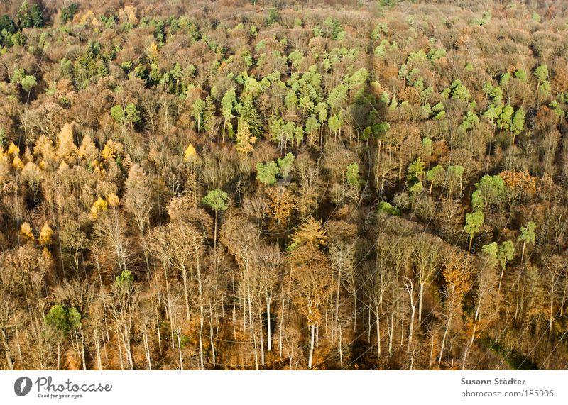 Schattenwerfer Baum grün Blatt Wald Herbst Wiese braun orange groß Dach Turm Hügel Balkon Bauwerk