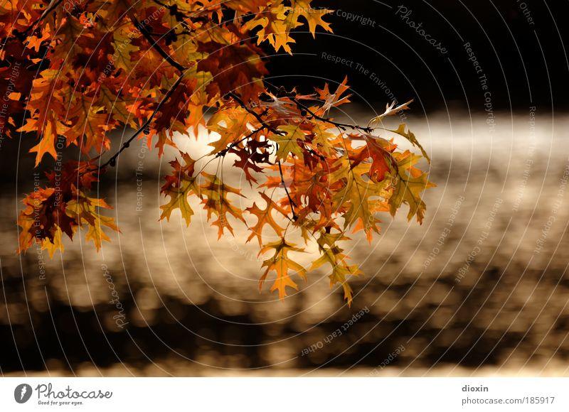 Happy Birthday, Photocase Umwelt Natur Pflanze Wasser Sonnenlicht Herbst Baum Blatt Wildpflanze Garten Park glänzend braun gelb gold schwarz schön Idylle Ast