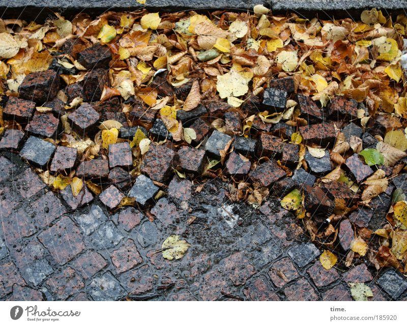 HAPPY BIRTHDAY, PHOTOCASE! Blatt gelb Herbst Stein braun dreckig Wetter nass Baustelle viele Straßenbelag durcheinander Sanieren steinig Erneuerung