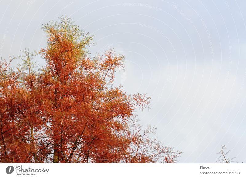 Happy Birthday, Photocase! Natur Himmel Baum Herbst Park orange Jahreszeiten Zweige u. Äste Wildpflanze