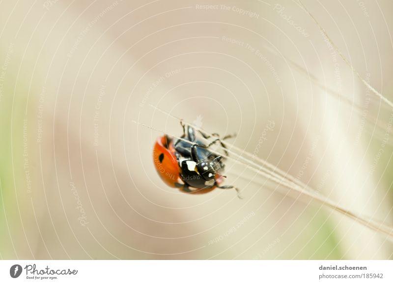 !!!! happy birthday - photocase !!!! Sommer Tier Gras Bewegung Glück Wege & Pfade Zufriedenheit Erfolg Zukunft Insekt Mobilität Marienkäfer