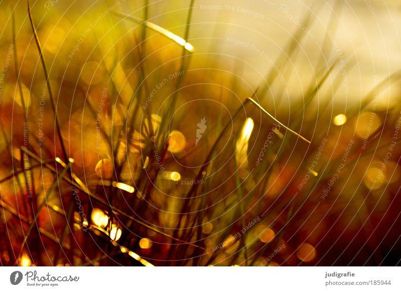 Happy Birthday, photocase! Natur Sonne Pflanze Sommer Wiese Gras Wärme glänzend Umwelt gold Wachstum natürlich Idylle leuchten Halm Schönes Wetter